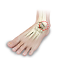 Ankle Cartilage Injury